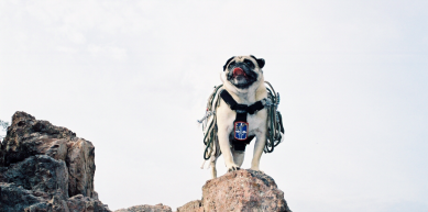 A picture from PAPAGO PARK by Vinny the Pug