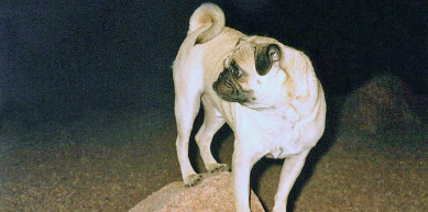 A picture from Faux Mt. Camelback by Vinny the Pug