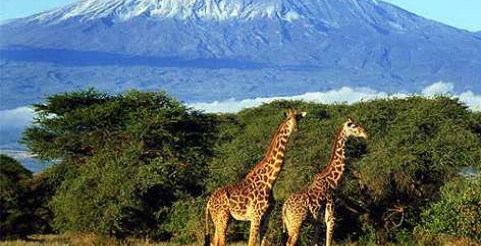 Kilimanjaro climb in Kilimanjaro / Uhuru/Kibo Peak
