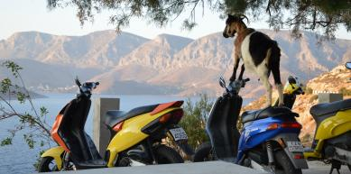 A picture from Kalymnos by Smart Topo