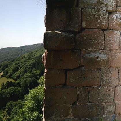 Vosges by . Corny wonder .