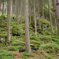 Ginzling Wald by Greg O\'ry