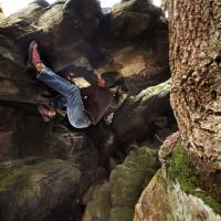Cademan Wood by Crimpington Bear