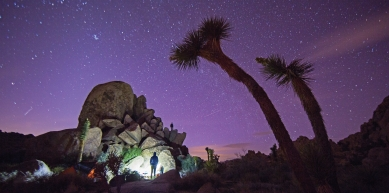 A picture from Joshua Tree by Vasque