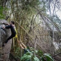 Reserva Florestal do Grajaú by Guilherme Ferraz