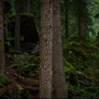 Ginzling Wald by Christoph Detschmann