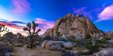Sunset climb - JOSHUA TREE