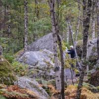Fontainebleau by Gabriela Folgar