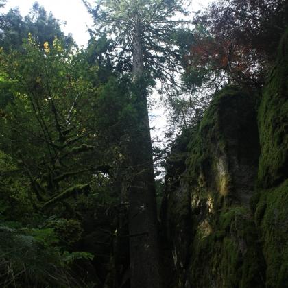 Gfällfels blackforest by Sepehr Pishavar