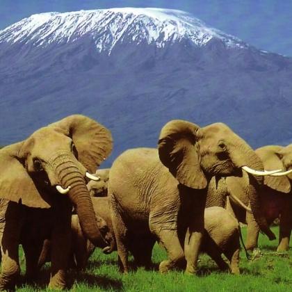 Kilimanjaro / Uhuru/Kibo Peak by Andy bergclimb