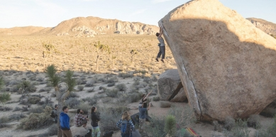 A picture from Joshua Tree by Michael Miller