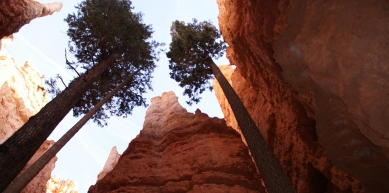 A picture from Bryce canyon by Deborah Bionaz