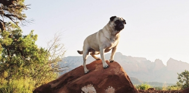 A picture from Vinny the Pug Bouldering in Sedona by Vinny the Pug