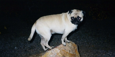 A picture from Superstition Mountains by Vinny the Pug