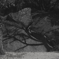 Reserva Florestal do Grajaú by Pedro Gomes