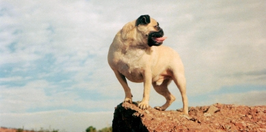 A picture from Mt. Papago by Vinny the Pug