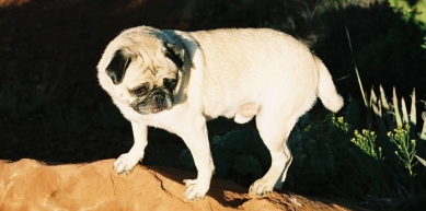 A picture from Sedona, Arizona by Vinny the Pug