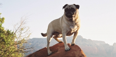 A picture from Mt. Sedona by Vinny the Pug