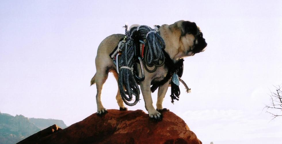 about Vinny's climbing Gear  in Arizona Senoran Desert Region
