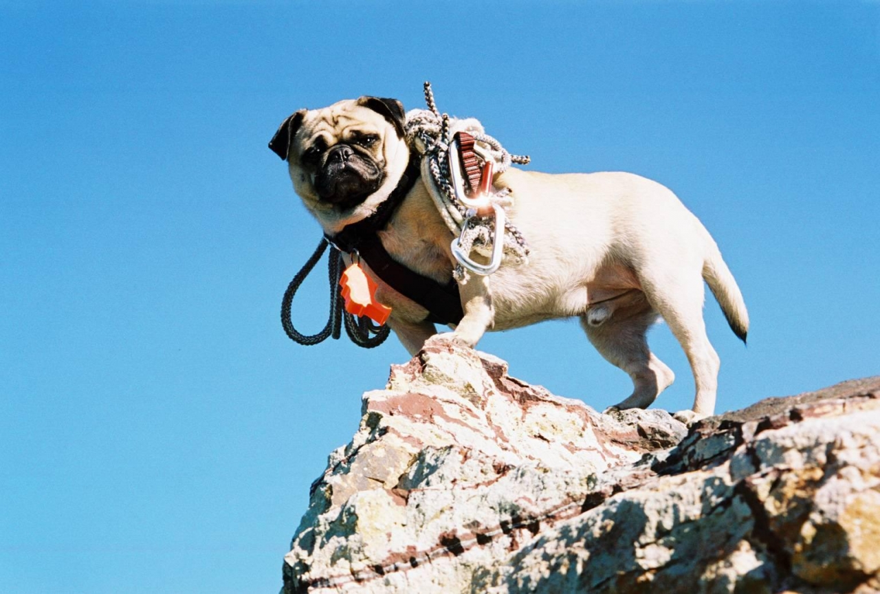A picture from Vinny the Pug and Climbing Arizona by Vinny the Pug