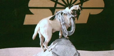 A picture from Phoenix, Arizona at Hayden at 12th Streets by Vinny the Pug