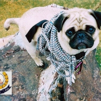 Mt. Camelback by Vinny the Pug