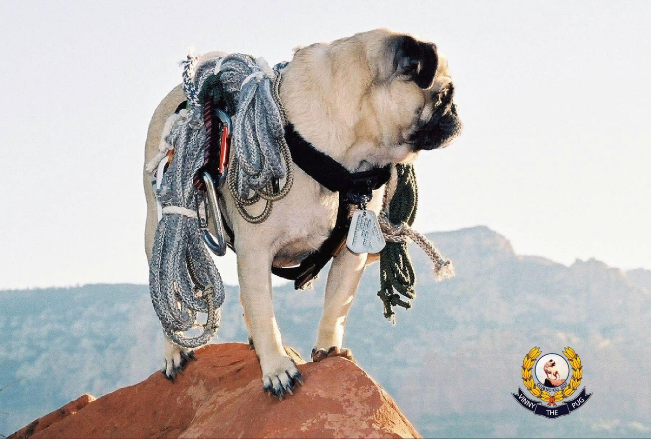 A picture from Mt. Cameback by Vinny the Pug