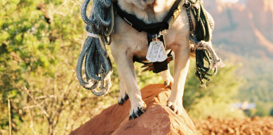 A picture from Faux Mt. Sedona by Vinny the Pug