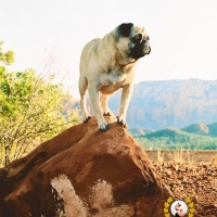 Mt. Sadona, Arizona by Vinny the Pug