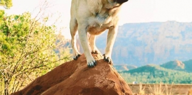 A picture from Mt. Sadona, Arizona by Vinny the Pug