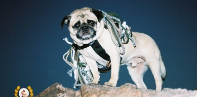 A picture from Mount Papago by Vinny the Pug