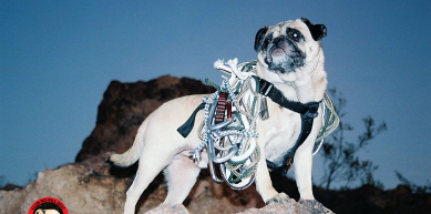 A picture from Vinny the Pug atop Mount Papago by Vinny the Pug