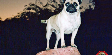 A picture from CLUB NO-KILL NORWAY by Vinny the Pug
