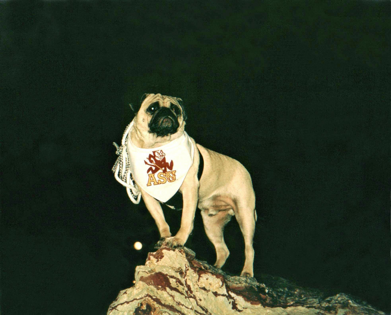 A picture from A Moon Lit Evenin atop Mt. Camelback by Vinny the Pug