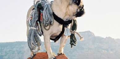 A picture from Beautiful Sedona, Arizona by Vinny the Pug
