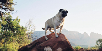 A picture from Sedona by Vinny the Pug