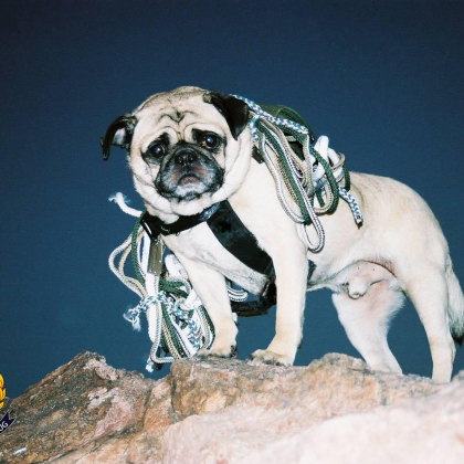 Mt. Camelback, Phoenix, Arizona by Vinny the Pug