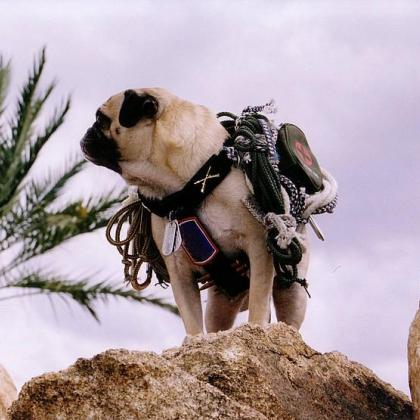 Vinny the Pug Upon Mt. Sedona by Vinny the Pug