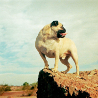 "Vinny's Photo from ""CLIMBING"" Magazine by Vinny the Pug"