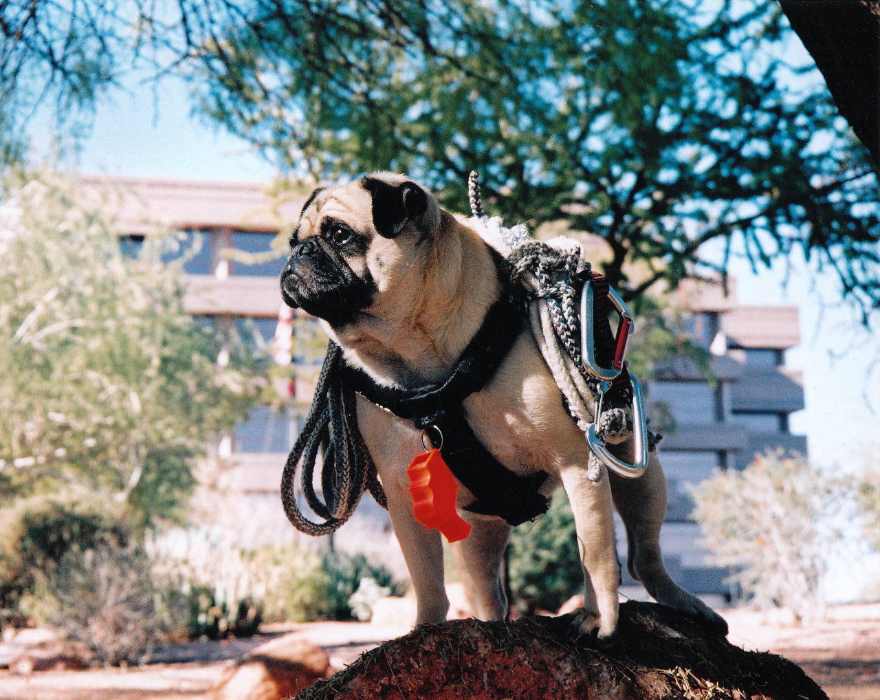 A picture from Miniture Mount Phoenix by Vinny the Pug