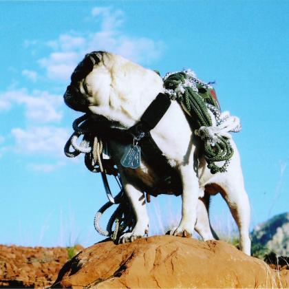Sedona by Vinny the Pug