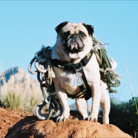 Sedona, Arizona by Vinny the Pug