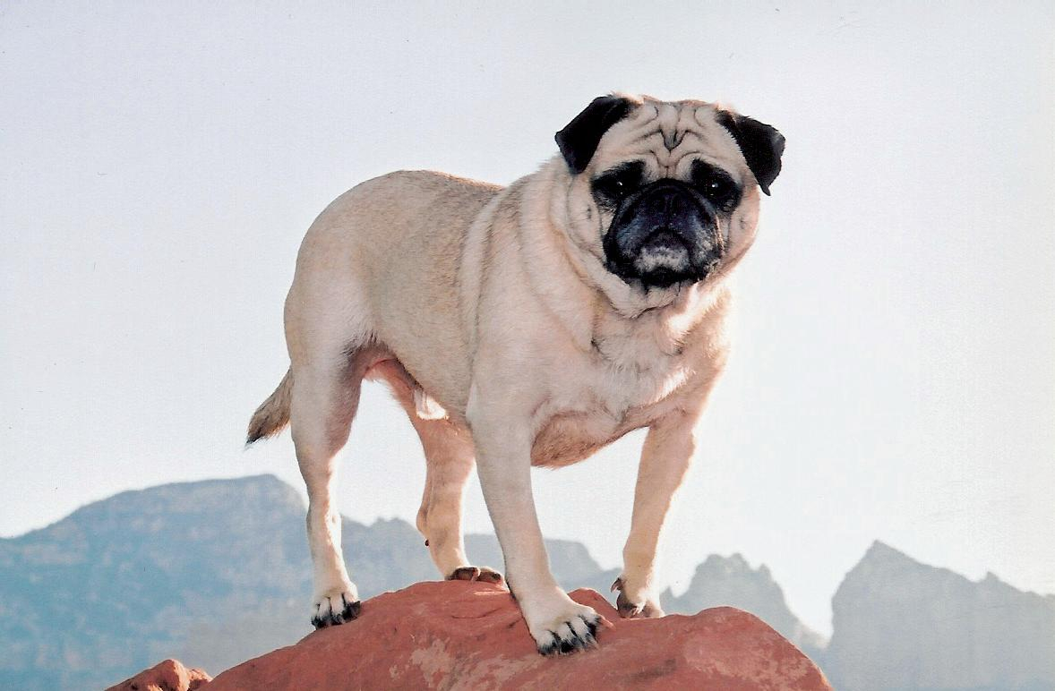 A picture from Climbing in Sedona by Vinny the Pug