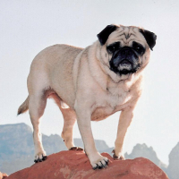 Climbing in Sedona by Vinny the Pug