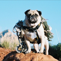 Mt. Sadona, Arizona by Vinny the Pug