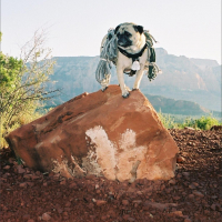 Sedona by Vinny the Pug