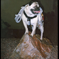 Faux Mt. Camelback by Vinny the Pug