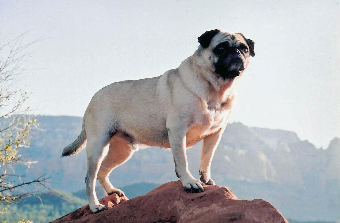 A picture from Vinny the Pug at Mt. Sedona by Vinny the Pug