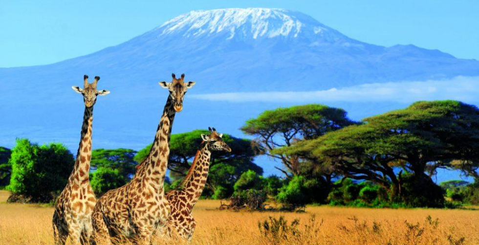 Kilimanjaro trekking expeditions best experience with discount offers in Kilimanjaro Tanzanite Safar...