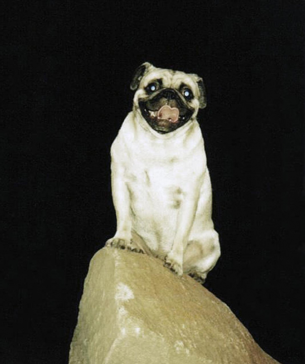 A picture from A Training Boulder in Phoenix by Vinny the Pug
